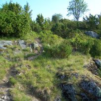 Lusaskard via Skagasete 002