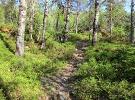 2018 Kvålen-Åsen-Fadnastølen-059