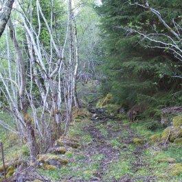 Njøs-Fadnastølen-033