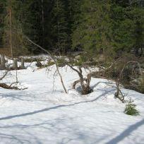 Skahaug-Raumålsgrinda-025
