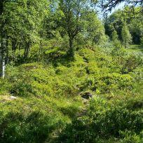 Engjasete-Dalsbotnen-002