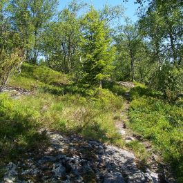 Engjasete-Dalsbotnen-012