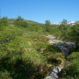 Engjasete-Dalsbotnen-017