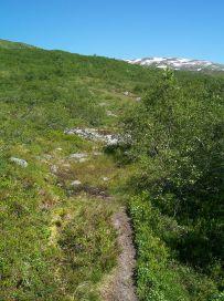 Engjasete-Dalsbotnen-022