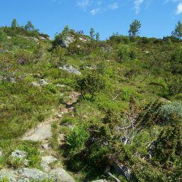 Engjasete-Dalsbotnen-043