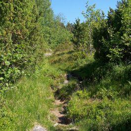 Engjasete-Hellesetberget-005