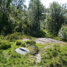 Engjasete-Hellesetberget-027