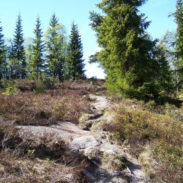 Skahaug-Stokksete-002