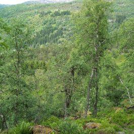 Fadnastølen-Havrane-021