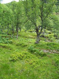 Fadnastølen-Havrane-028