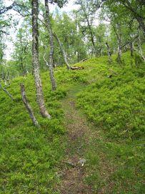 Fadnastølen-Havrane-035