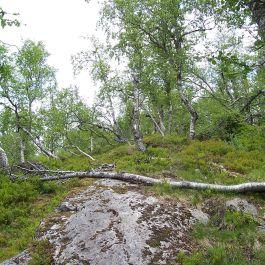 Fadnastølen-Havrane-040