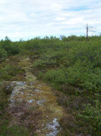 Fadnastølen-Havrane-062