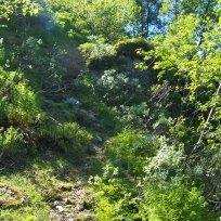 Havrane-Bergsete-006