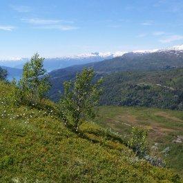 Havrane-Bergsete-035