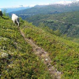 Havrane-Bergsete-043