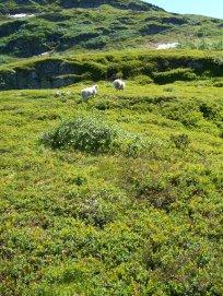 Havrane-Bergsete-045