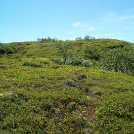 Havrane-Bergsete-046