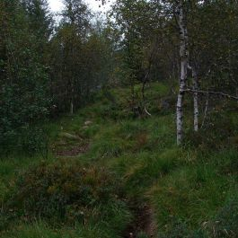 Henjadalen-Sumh og Fj-014
