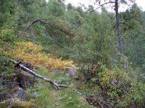 Henjadalen-Sumh og Fj-031