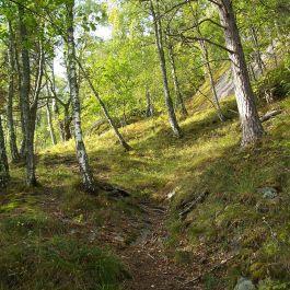 Skjer-Skoparsete-013