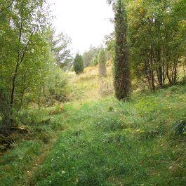 Skjer-Skoparsete-050