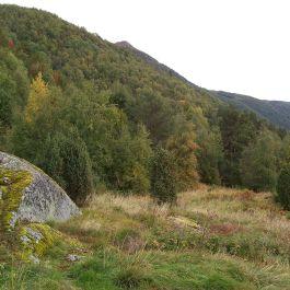 Skjer-Skoparsete-055