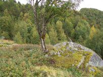 Skjer-Skoparsete-056
