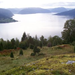 Skjer-Skoparsete-061