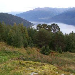 Skjer-Skoparsete-066