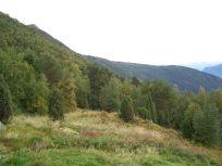Skjer-Skoparsete-067