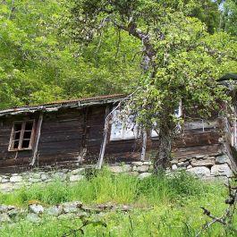 Skoparsete-Eitorn-062
