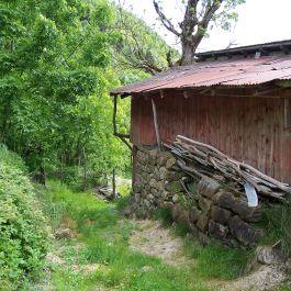 Skoparsete-Eitorn-088