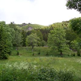 Skoparsete-Eitorn-089