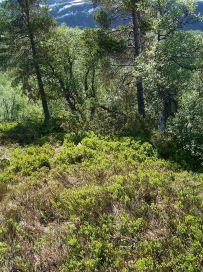 Tuftahaug via Fadnastølen 024