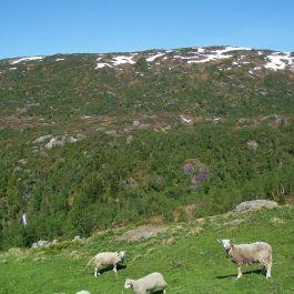 Tuftahaug via Fadnastølen 048