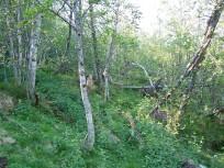 Dalhjedla-Stokksetesti-012