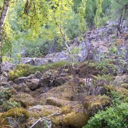 Dalhjedla-Stokksetesti-020