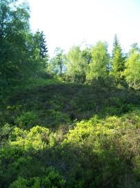 Dalhjedla-Stokksetesti-025