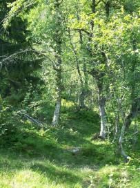 Dalhjedla-Stokksetesti-027