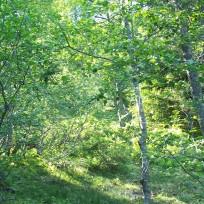 Dalhjedla-Stokksetesti-029