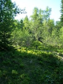 Dalhjedla-Stokksetesti-030