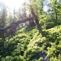 Dalhjedla-Stokksetesti-035