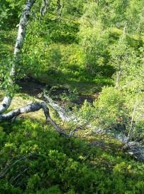 Dalhjedla-Stokksetesti-039