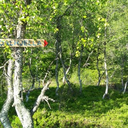 Dalhjedla-Stokksetesti-041