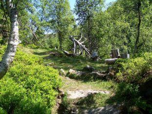 Tuftahaug inn Njøsadalen 036