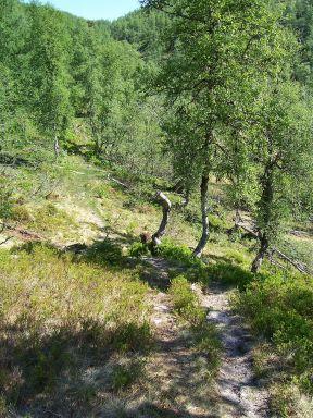 Tuftahaug inn Njøsadalen 039