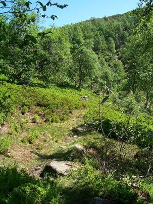 Tuftahaug inn Njøsadalen 041
