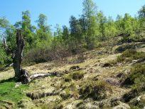 Tuftahaug inn Njøsadalen 047