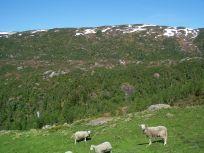 Tuftahaug inn Njøsadalen 062